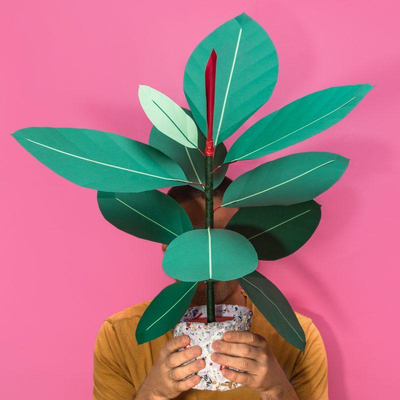 Jungla, plantas de papel ficus robusta fondo rosa