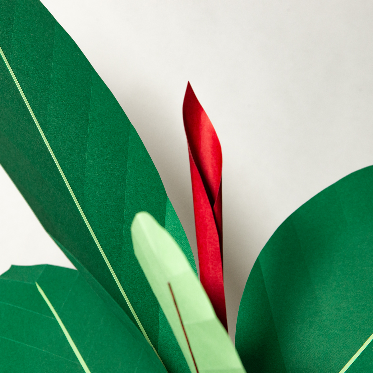 jungla, plantas de papel detalle ficus