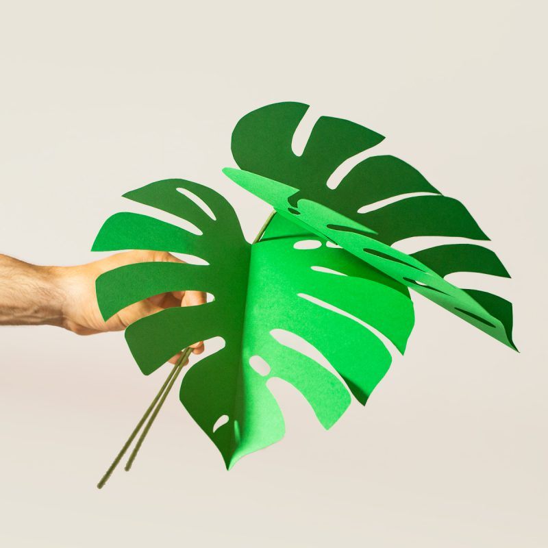 jungla, plantas de papel hojas de monstera
