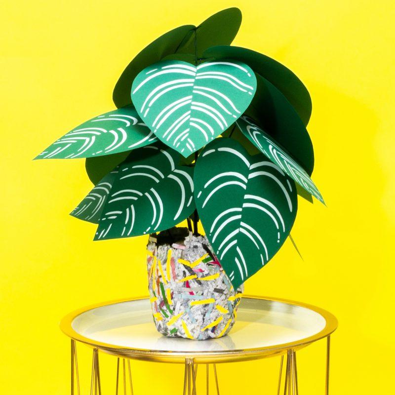 Planta de papel variedad Calathea pinstripe