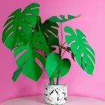 Jungla, plantas de papel. monstera fondo rosa