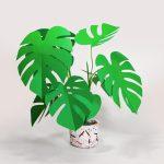 jungla, plantas de papel monstera