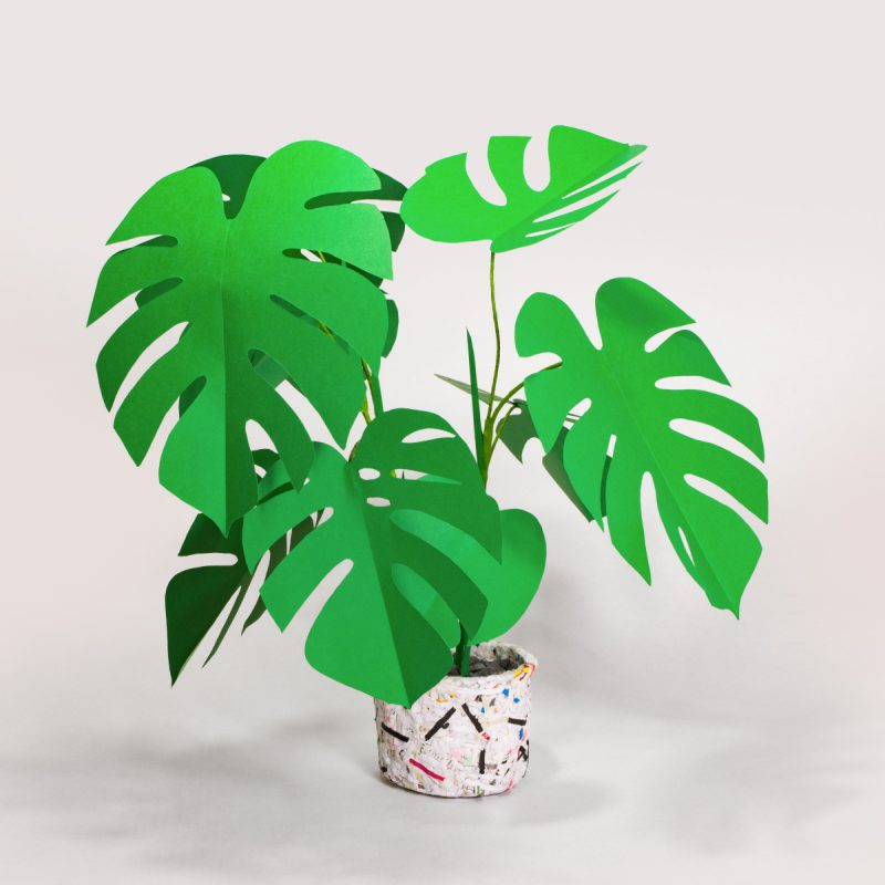 jungla, plantas de papel monstera