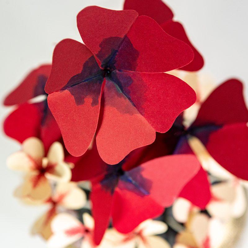 Jungla plantas de papel, oxalis detalle