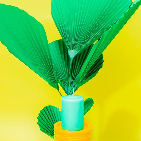 jungla, plantas de papel palma