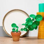 jungla, plantas de papel. pilea planta del dinero