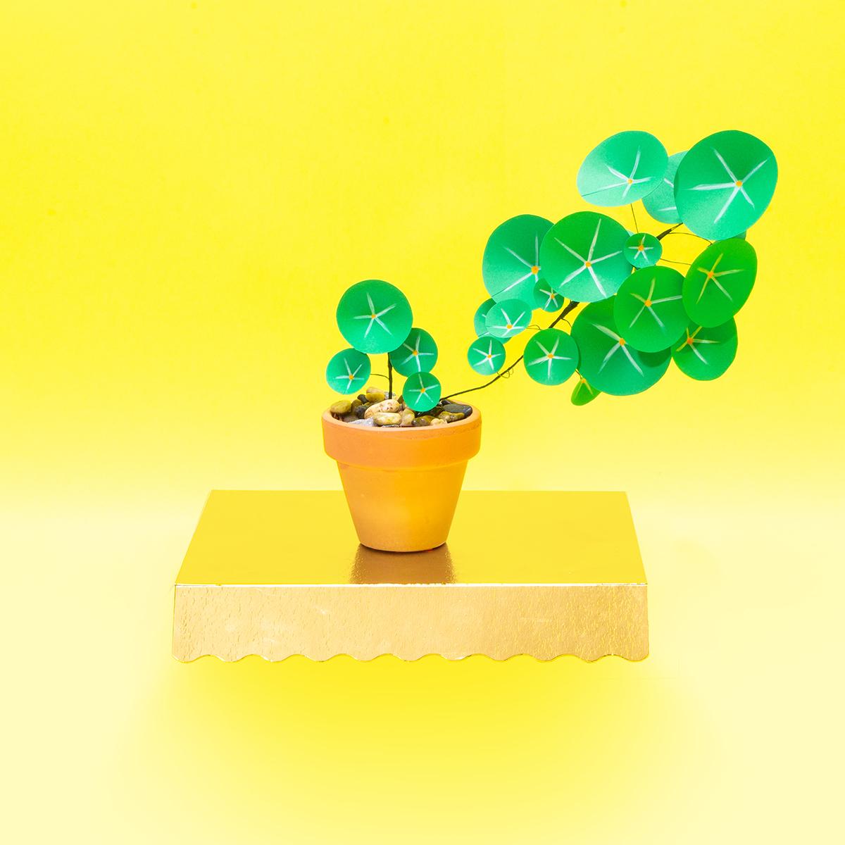 jungla, plantas de papel. pilea planta del dinero flotando
