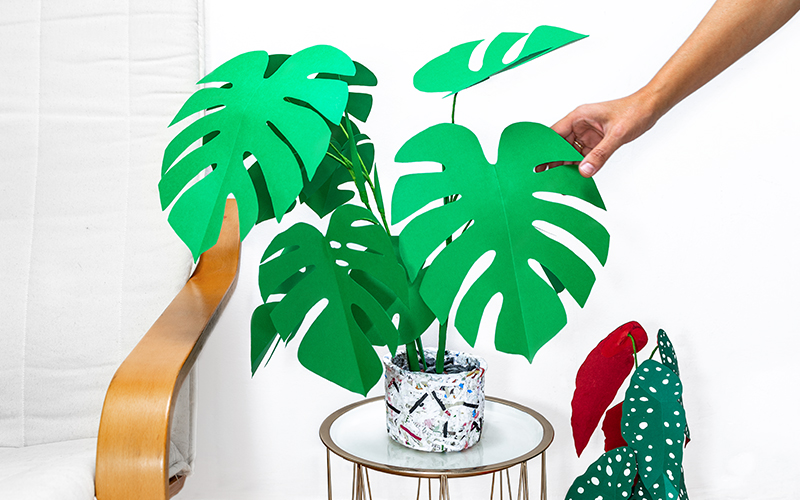 jungla, plantas de papel. Monstera y poka dot