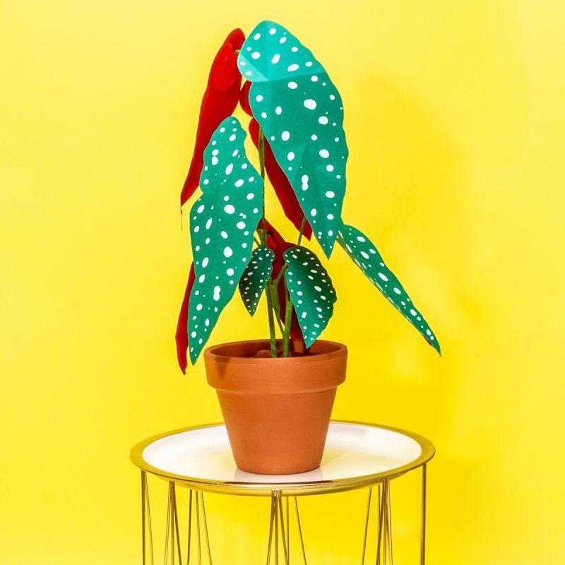 Jungla, plantas de papel polka dot