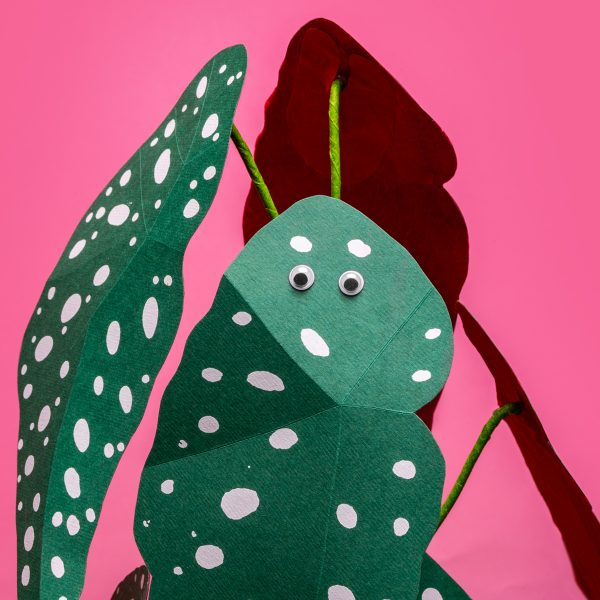 jungla, plantas de papel polka dot detalle ojitos