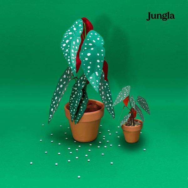 Jungla, plantas de papel polkas