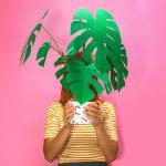 Jungla, plantas de papel. sosteniendo monstera fondo rosa