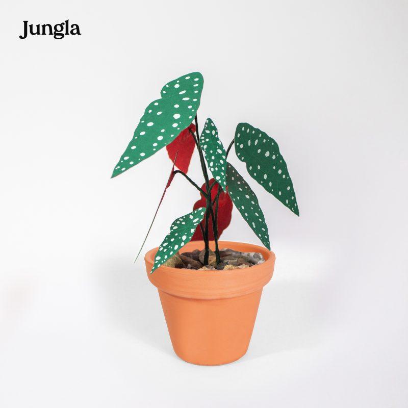 Jungla, plantas de papel polka mini terracota