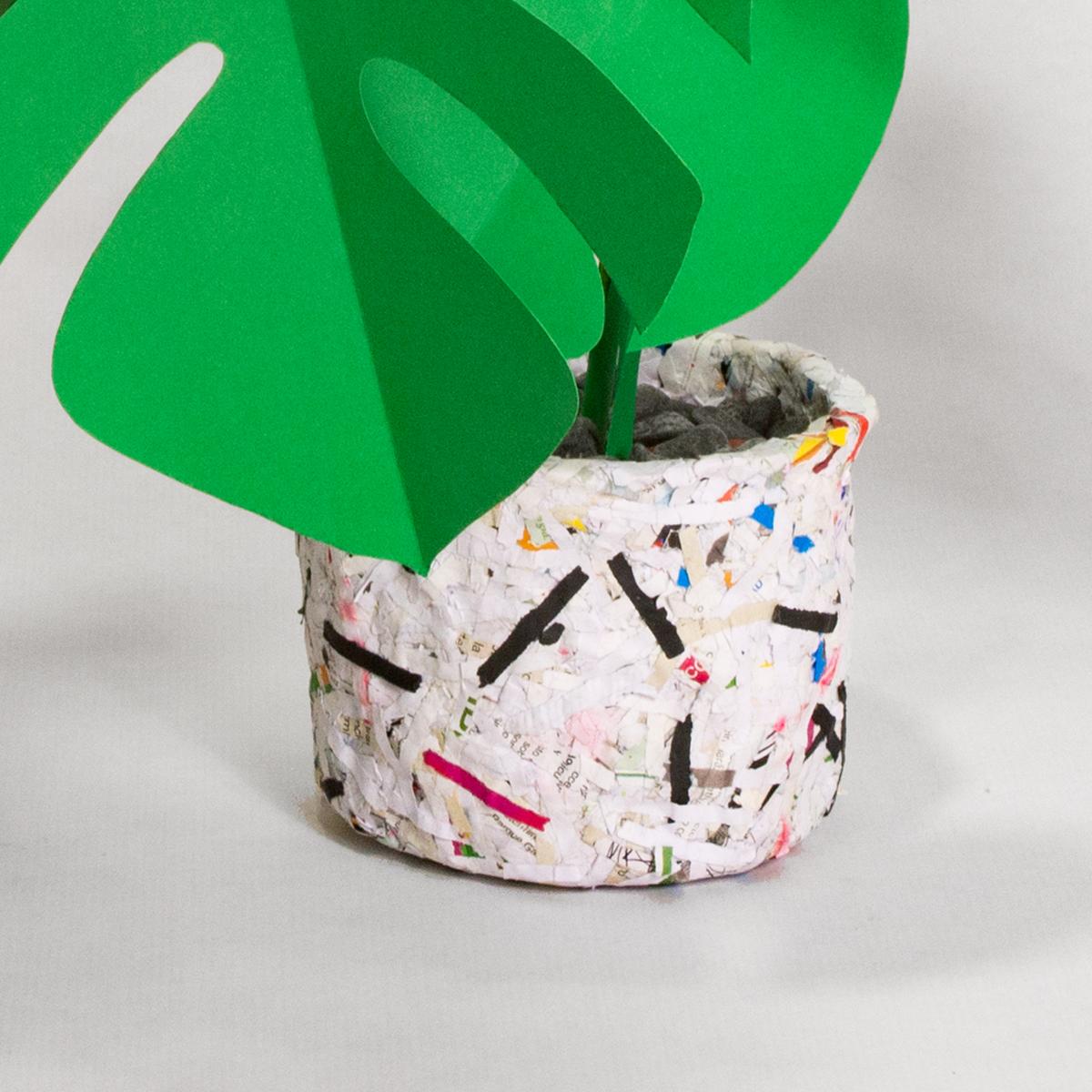 jungla, maceta de papel monstera