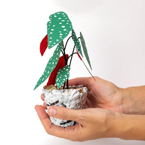 Jungla, plantas de papel polka dot mini