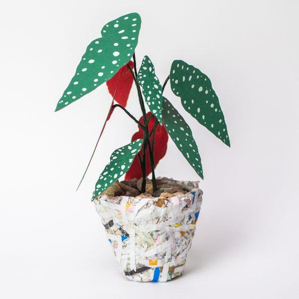 Jungla, plantas de papel polka dot mini3